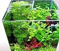 Blau Aquaristic - Nano-Aquarium Cubic 10 Liter - Basis Glas Aquarium