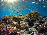 wandmotiv24 Fototapete Vliestapete Korallenriff KT481 Größe: 350x260cm Unterwasser Fische Tauchen