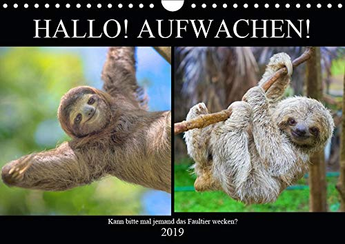 Hallo! Aufwachen! Kann bitte mal jemand das Faultier wecken? (Wandkalender 2019 DIN A4 quer): Abhängen! Das ganzes Leben lang! (Monatskalender, 14 Seiten ) (CALVENDO Tiere)