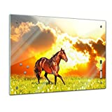 Memoboard 60 x 40 cm, Tiere - Pferd auf einer Wiese - Glasboard Glastafel Magnettafel Memotafel Pinnwand Schreibtafel - Tiermotive - Tierbild - Tierfotografie - Tier - Pferdebild - Pferdemotiv - wildes Pferd - Landschaft - Landschaftsszene - Wiese - Wohnzimmer - Schlafzimmer - Küche - Esszimmer - Bild auf Glas - Glasbild - Handmade - Design - Art