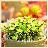 Nouveaux 100 pcs/Paquet 99 Kinds Frais de Choisir Lithops Jardin Succulentes Usine Pseudotruncatella Bureau Bonsai Fleur Flores, HOA: 19