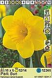Narcissus - Narzisse/Osterglocke' Park Sun' (5 Blumenzwiebeln)