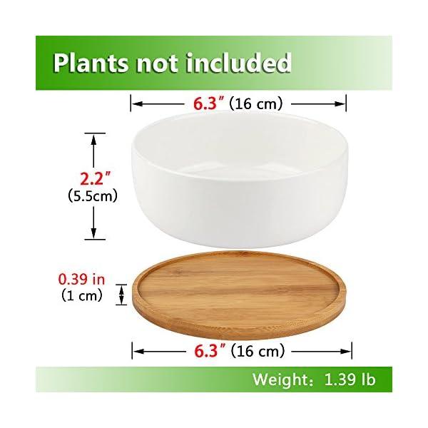 Innoter, maceta de cerámica blanca con diseño de encaje para plantas de interior y cactus