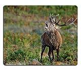 Liili Mauspad Naturkautschuk Mousepad Bild-ID 33391854Red Deer Hirsch Röhrender in Rut