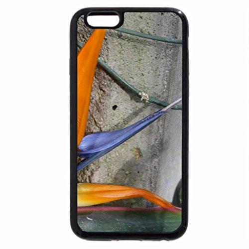 iPhone 3S/iPhone 6Coque (Noir) Oiseau du paradis à Edmonton Pyramides
