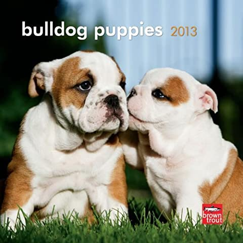 Bulldog Puppies 2013 7X7 Mini Wall by BrownTrout Publishers (2012-07-09)