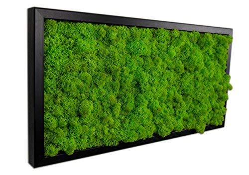 Islandmoosbild Moosbild Islandmoos Rentiermoos Moos Moosbilder Wandbild Wanddeko Wandbilder mit Island Moss Mooswand Pflanzenbild Bilder Deko mit Holzrahmen Bilderrahmen (25 x 25 cm, Weiss)