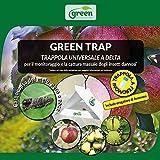 Green Ravenna Trappola Pannello Colla erogatore feromone Insetti carpocapsa melo Pero Noce
