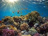 Fototapete Korallenriff 350cm Breit x 260cm Hoch Vlies Tapete Wandtapete - Tapete - Moderne Wanddeko - Wandbilder - Fotogeschenke - Wand Dekoration wandmotiv24