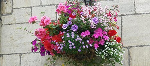 pack-x12-mixed-varieties-trailing-hanging-basket-plug-plants-starter-pack