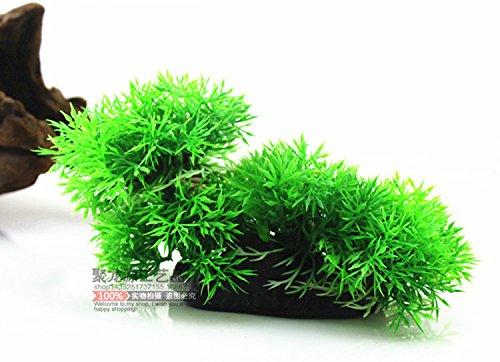 suunhh-simulation-von-szene-gebaude-mit-pflanzen-aquarium-kunststoff-pflanzen-grun