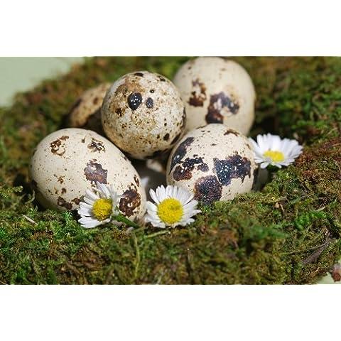 60x uova di quaglia... Naturalmente bella Primavera messaggeri.. - Uova Di Quaglia