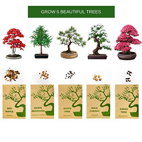 Urban Sprout Bonsai Tree Kit Grow Your Own Bonsai Trees from Seeds - Gardening Gift Set - 5 ...