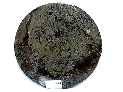 Natural mente-Fossil ien-Piatto, 21CM, Orthoceras, Ammonit, cristallo, versteinerung, minerale, N. 288