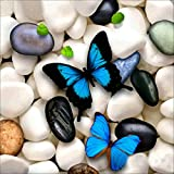 Greatmin DIY 5D Full Drill Diamond Painting Rhinestone Embroidery Cross Stitch Arts Craft for Home Decoration A Butterfly 11.8 x 11.8 inches