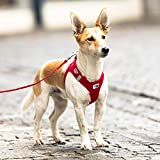 CURLI Brustgeschirr Plush Vest AIR-MESH red für Hunde L (46 – 52 cm) - 3