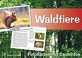 Waldtiere - Fotokarten mit Sachinfos - Heike Jung