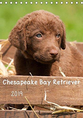 Chesapeake Bay Retriever 2019 (Tischkalender 2019 DIN A5 hoch): In diesem Kalender wird eine der insgesamt 6 Retrieverrassen präsentiert. (Monatskalender, 14 Seiten ) (CALVENDO Tiere) (Bay Retriever-welpen Chesapeake)