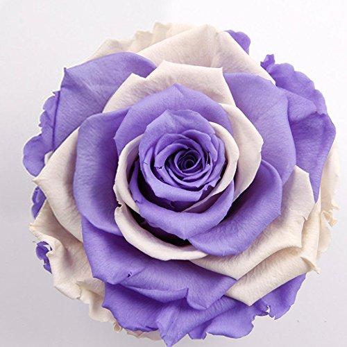 200 pcs/Sac Graines Semences de Rose Couleur rainbow de Graines Fleurs Graines à Planter Rare de Jardin Balcon Vivaces Belle Floraison Bonsaï en Plein Air pour l'Intérieur et l'Extérieur