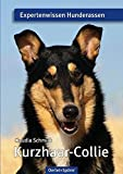Kurzhaar-Collie: Expertenwissen Hunderassen