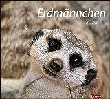 times&more Erdmännchen Bildkalender 2020 30x27cm