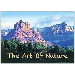 Calamite frigorifero Negozio Di Fiori G. Huber l'arte della natura