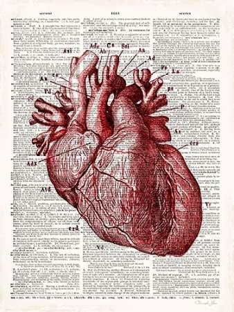 feelingathome-Impresi—n-artistica-Vintage-Anatomie-Coeur-cm77x57-pos