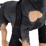 iBaste Haustier Hunde Bandage Vorderbein Kniescheibe Beineschutz Bandage Hunde Gelenkschutz Protector Therapeutische Operation Verletzungen 1 Paar