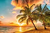 Papier peint de Barbade pour décoration murale plage Caribéenne de la mer Palm...