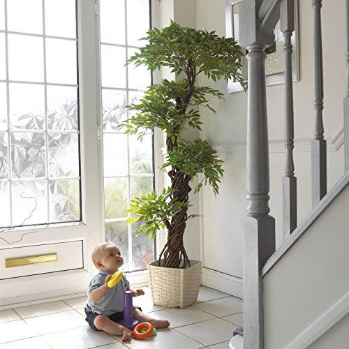 zimmerpflanzen g nstig kaufen bei zimmerpflanzen. Black Bedroom Furniture Sets. Home Design Ideas