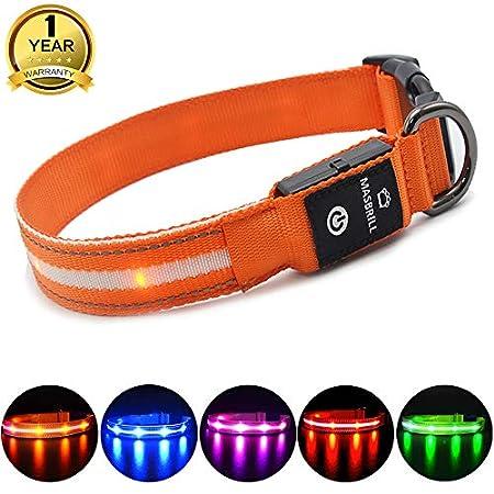 MASBRILL LED Leuchthalsband für Hunde Aufladbar Hundehalsband Leuchtend mit einstellbare Länge, 100% Wasserdicht Blinkende Lichter mit USB