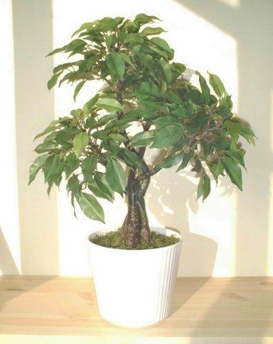 Árbol Ficus (44cm) - Planta Artificial SIN MACETA