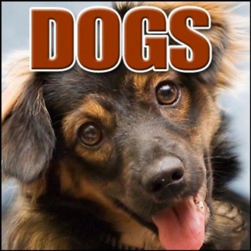Animal, Dog - Miniature Schnauzer: Sneeze, Dogs (Miniature Schnauzer Dog)