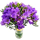 Clare Florist Purple Freesia Bouquet - Fresh Fragrant Freesia Flowers to Brighten Your Day