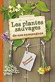 Les plantes sauvages de nos campagnes