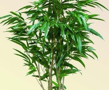 AUSLAUF Ficus Longifolia Kunstbaum, 846 Blätter, 210cm – künstliche Bäume Kunstpflanzen Gummibaum