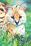 Notes: Serval Cat (Felis Serval) - Blank College-Ruled Lined Notebook