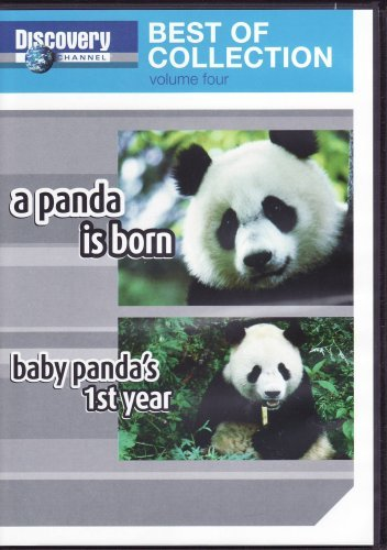 a-panda-is-born-baby-pandas-first-year-dvd-discovery-channel