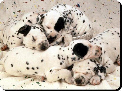 Dálmata perro alfombrilla de ratón/Pad–regalo único para todos los amantes del perro 101