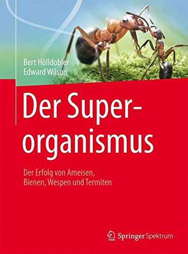 der-superorganismus-der-erfolg-von-ameisen-bienen-wespen-und-termiten