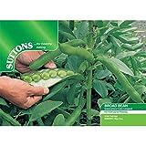 Suttons Seeds 194996 Semences pour fèves géantes Vertes