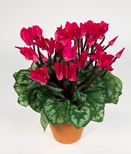 Seidenblumen Roß Großes Alpenveilchen 32cm pink im Topf NT künstliche Blumen Kunstpflanzen Kunstblumen Cyclamen