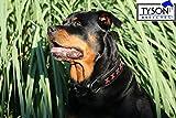Hundehalsband Halsband Hund Leder Zierstich Kreuz ROT Lederhalsband Extra 6,5 cm extra Breit Gr. L 50-58 cm Mittel Hunde
