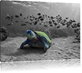 Schildkröte im Ozean schwarz/weiß Format: 80x60 auf Leinwand, XXL riesige Bilder fertig gerahmt mit Keilrahmen, Kunstdruck auf Wandbild mit Rahmen, günstiger als Gemälde oder Ölbild, kein Poster oder Plakat