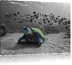 Schildkröte im Ozean schwarz/weiß Format: 120x80 auf Leinwand, XXL riesige Bilder fertig gerahmt mit Keilrahmen, Kunstdruck auf Wandbild mit Rahmen, günstiger als Gemälde oder Ölbild, kein Poster oder Plakat