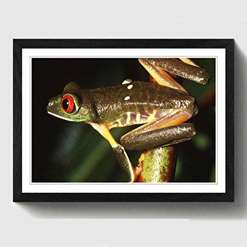 BIG Box Art Red Eyed Leaf Frog Print mit schwarzem Rahmen, Mehrfarbig, A2, 24,5x 18_ P, Holz, schwarz, 24.5 x 18-Inch -