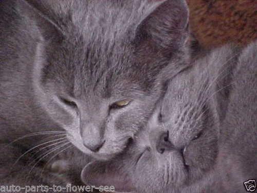 Kiddie Diddie saine Avoine/blé « biologique » CAT-+ Accessoires pour chiens Semence