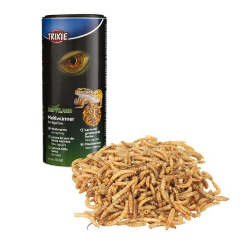 larves-de-vers-de-farine-sches