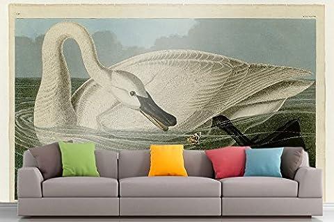 Roshni Arts®–curated Art Mural–Audubon–Cygne trompette–Plaque en vinyle autocollant 406| Ameublement