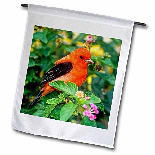 3dRose FL_94386_1 Texas, Süd Padre Island Scarlet Tanager Bird US44 BJA0108 Jaynes Gallery Gartenflagge, 30,5 x 45,7 cm